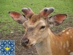 Lipcha Sights | Deer Farm