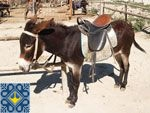Zalisne Sights - Donkey Farm - Miracle Donkey